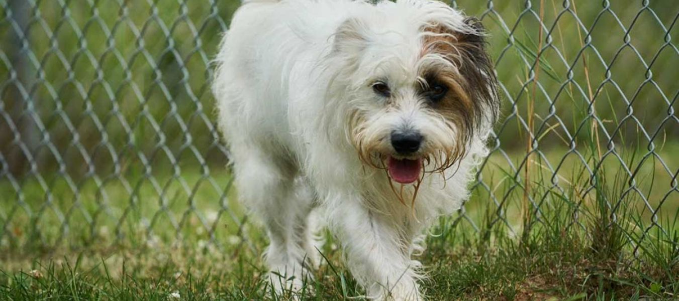 Patches - a little fluffly dog